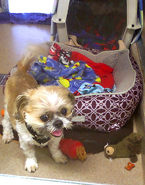 Snickers, a 10-year-old shih tzu, needs his kennel power cleaned daily because he likes to leap against the glass door.